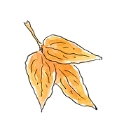 Leaf no 1 png.png