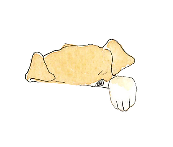 Leo png .png