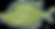 yellow fish png.png