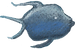 look fish png.png