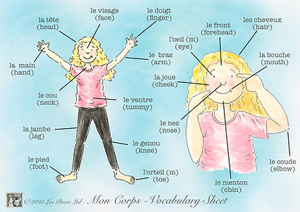 French vocab sheet of body parts