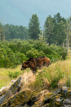 UnBEARably Wild Alaska