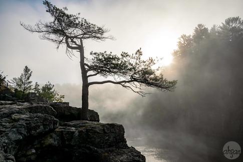 Fog on the St. Croix, study IV
