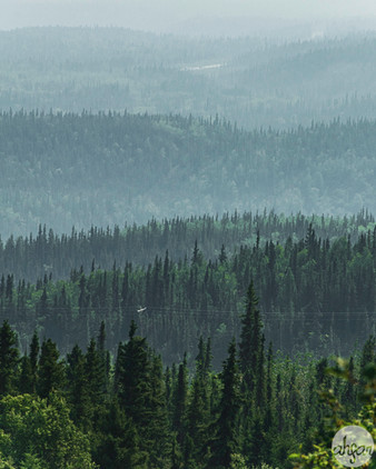Black Spruce Forest