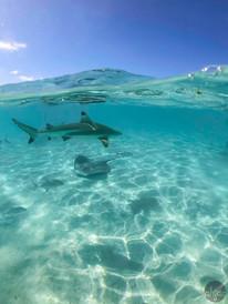 Polynesia Sea Life, study IV