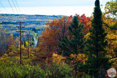 Northern Autumn Beauty