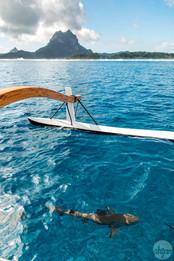 Polynesia Sea Life, study I