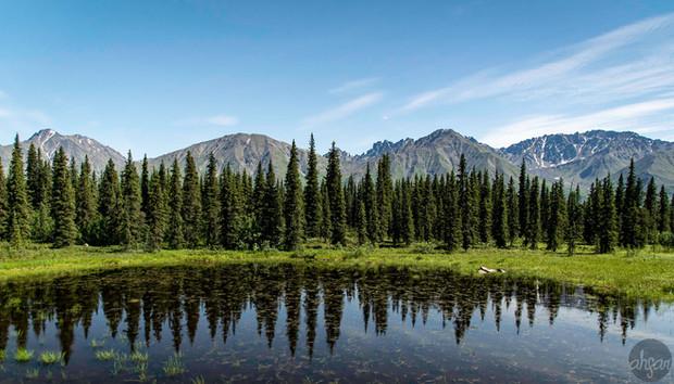 Wild Alaska