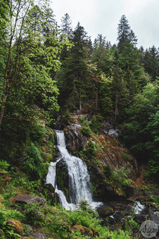 Black Forest Waterfall