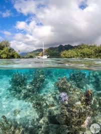 Mo'orea Lagoon, study III