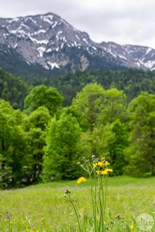 Bavarian Wildflowers