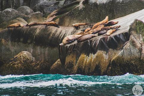 Sea Lion Nap Session