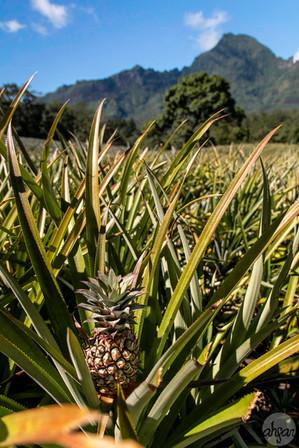 Mo'orean Pineapple Fields