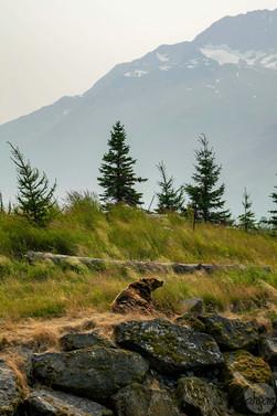 A Grizzly Landscape