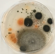 Mold After with computer 082018.png