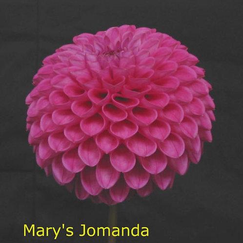 Mary's Jomanda