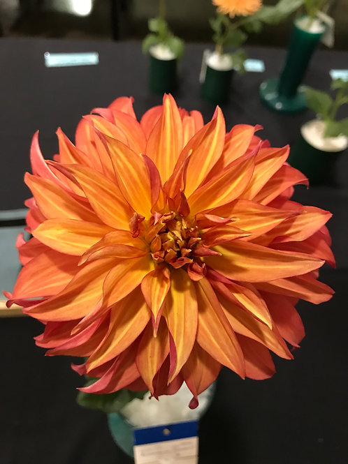 Bloomquist Pumpkin