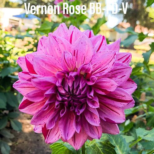 Vernon Rose