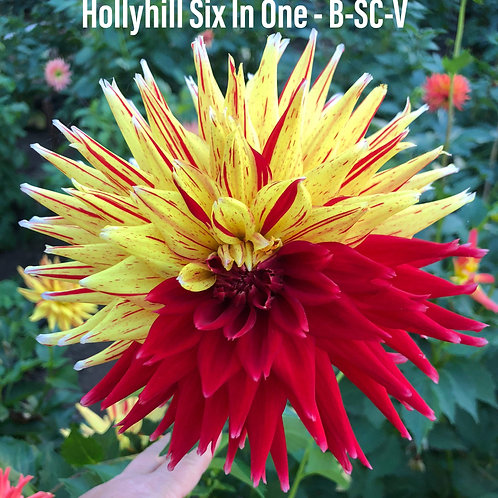 Hollyhill Six-in-One