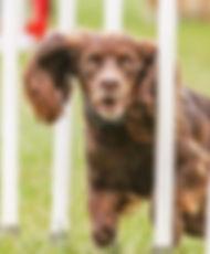 Bruce WCS Dog Training Emsworth