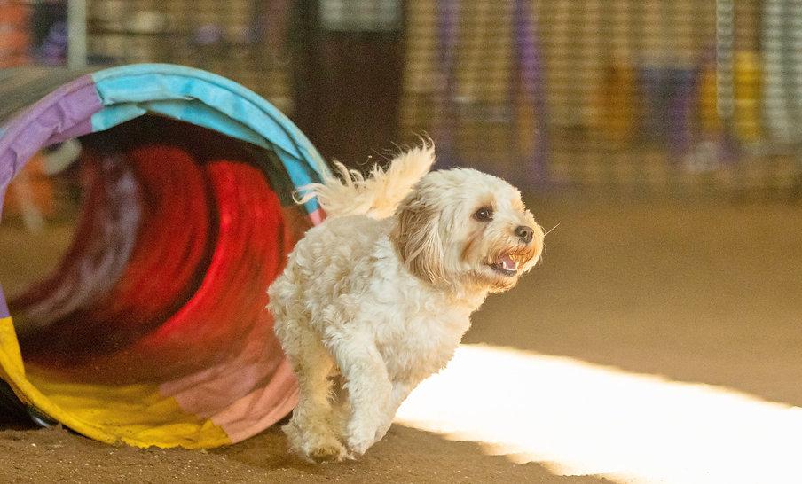 chichester dog training.jpg