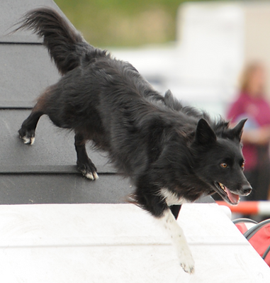 Chichester Dog Agility Classes