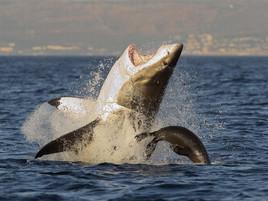 Three Leadership Lessons from Shark Week