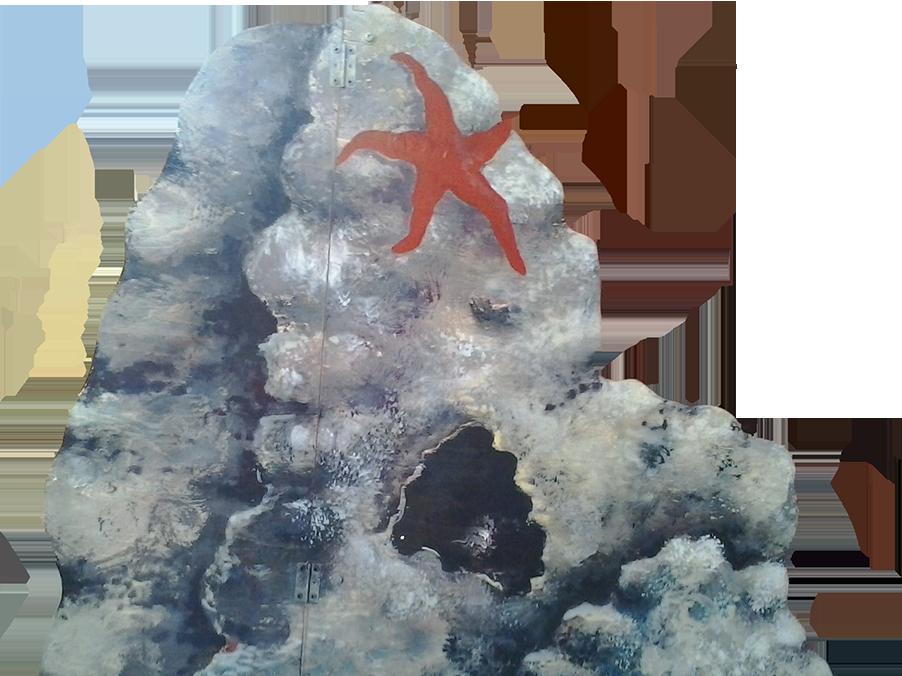 Rocce con Stella marina