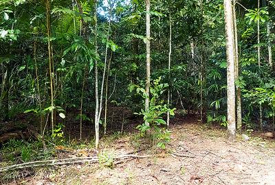 Rainforest Regrowth