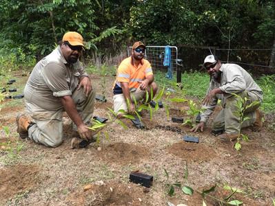 Jabalbina Rangers planting trees