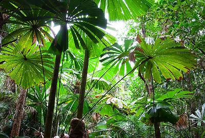Australian Fan Palms.jpg