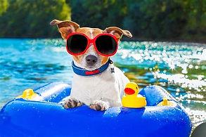 hund sommer.jpg