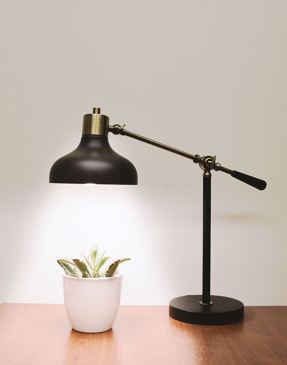 lamp shining over plant