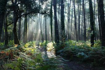 image de la forêt.jpg