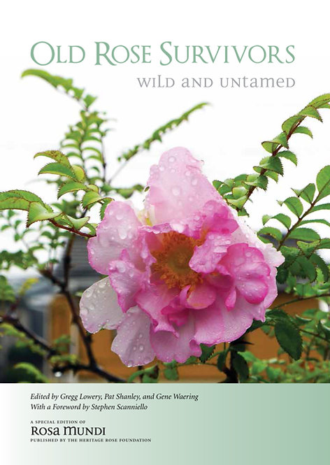 Old Rose Survivors - Wild & Untamed