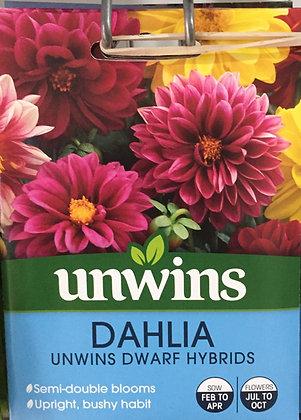 Dahlia | Unwins Dwarf Hybrids