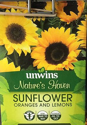 Sunflower | Oranges and Lemons