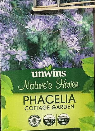 Phacelia | Cottage Garden