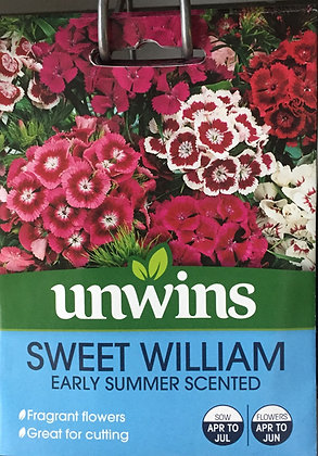 Sweet William | Early Summer Scented