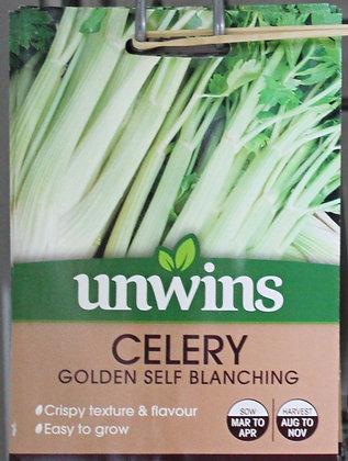 Celery | Golden Self Blanching