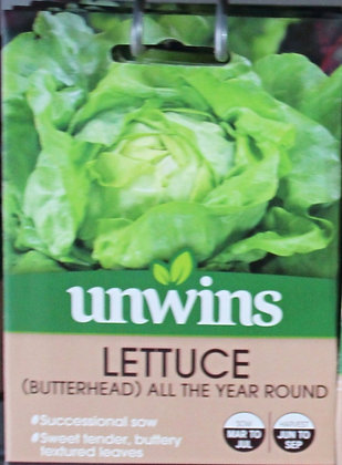Lettuce | (Butterhead) All The Year Round