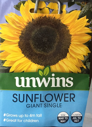 Sunflower | Giant Single