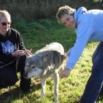 Wolf Awareness Day
