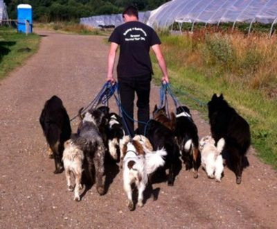 Full Time Dog Centre Assistant vacancy now filled