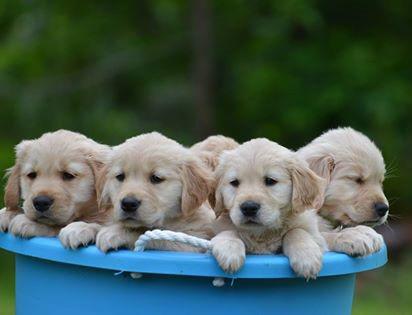 Canine Health Concern Worksop