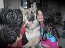 Tia the German Shepherd