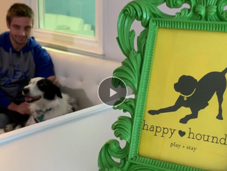 Doggy daycare run by young adults with developmental disabilities set to open