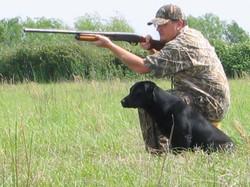 Black Lab, Gun Dog, Hunting Dog