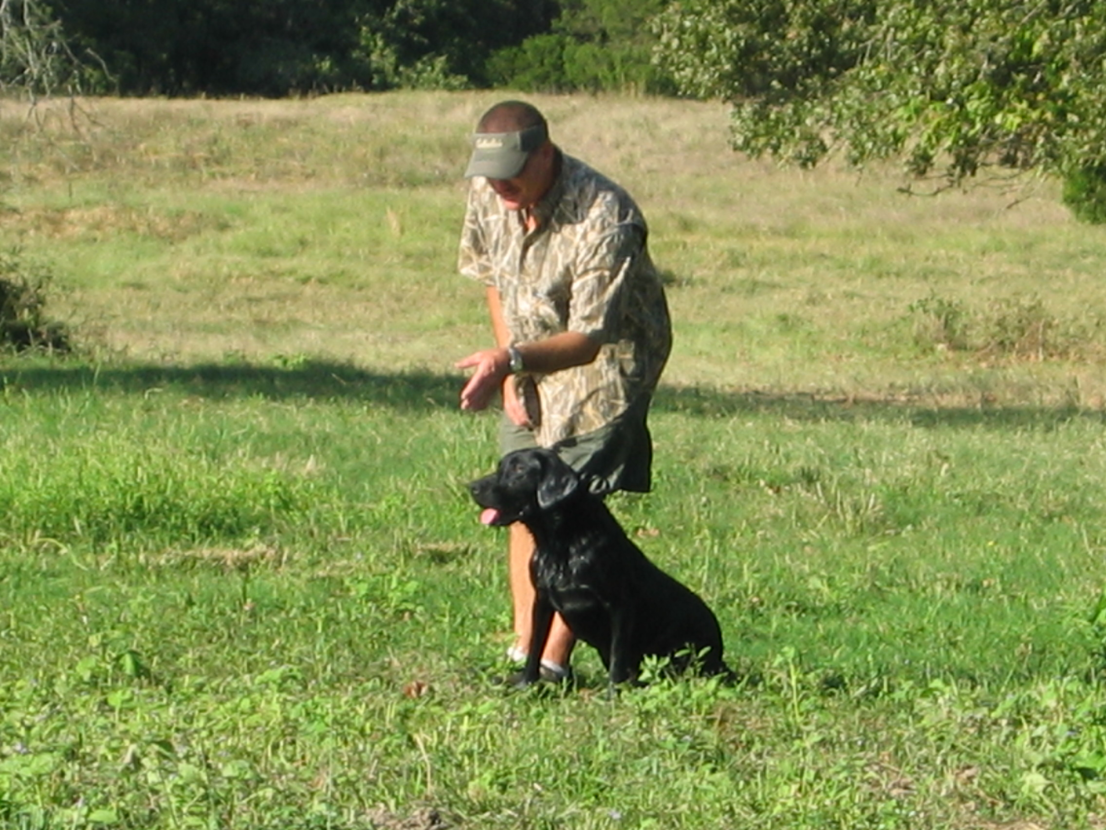 Gun Dog in a Hunt Test