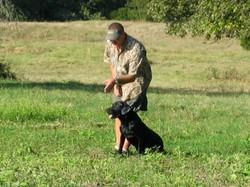Gun Dog in a Hunt Test
